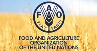 """""""سازمان خواربار و کشاورزی ملل متحد"""