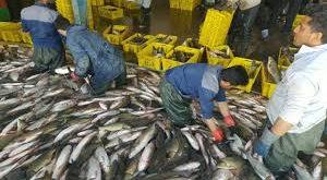 شرکت ماهی کارون